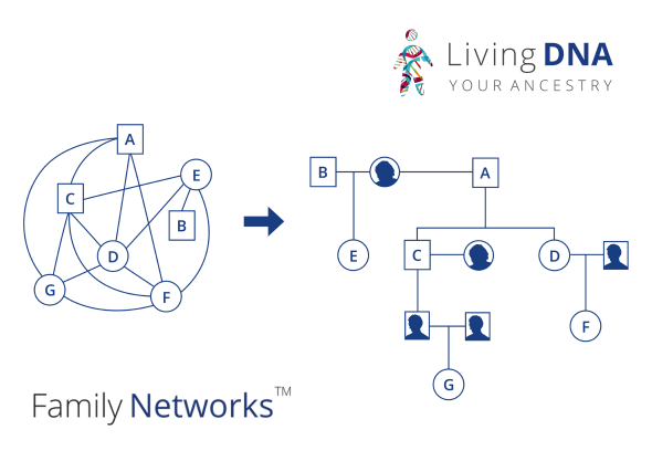 Living DNA Family Networks illustration